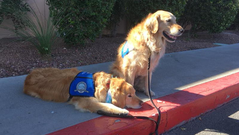 Dogs Visit Hospitals Nursing Homes